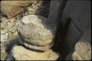 Green River Stromatolite