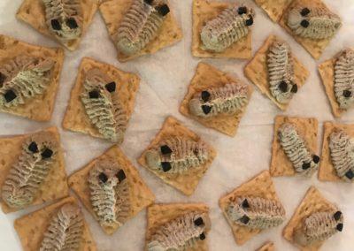 Trilobites On Crackers